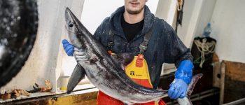 تصاویر) + حمله کوسه سفید 2 متری به ماهیگیر جوان (